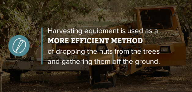 how nuts are harvested
