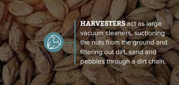 how nut harvesting machines work